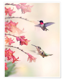 Poster  Hummingbirds and flowers