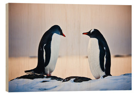 Bois  Two identical penguins