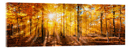 Verre acrylique  Autumnal forest panorama in sunlight - Jan Christopher Becke
