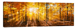 Toile  Autumnal forest panorama in sunlight - Jan Christopher Becke