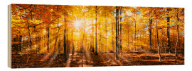 Bois  Autumnal forest panorama in sunlight - Jan Christopher Becke