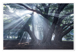 Poster Light rays at sunrise in a forest