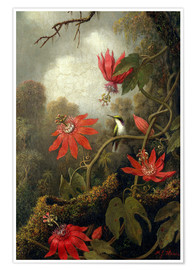 Poster  Colibris et passiflores - Martin Johnson Heade