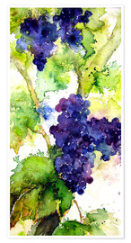 Poster Red grapes