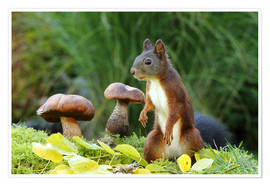 Poster  Squirrel on fodder search - Uwe Fuchs