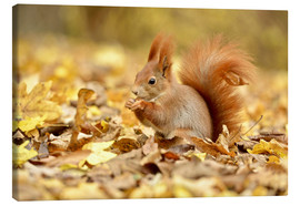 Tableau sur toile  Red Squirrel in an urban park in autumn