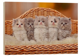 Tableau en bois  Five British Longhair kittens - Petra Wegner