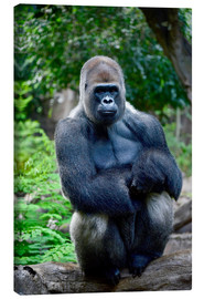 Toile  silverback sitting on tree trunk - imageBROKER
