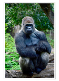 Poster  silverback sitting on tree trunk