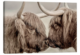 Toile  Highland Cattle, cows greeting each other - imageBROKER