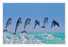 Poster  Six Bottlenose Dolphins leaping, Honduras - Gérard Lacz