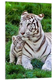 Forex  White Tiger, Mother with Cub - Gérard Lacz