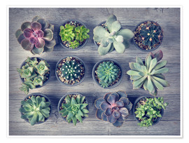 Poster Different succulents above the black wooden background