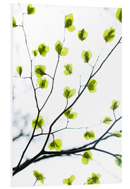Forex  Signs of Spring - Mareike Böhmer Photography