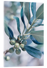 Verre acrylique  blue leaves - Atteloi