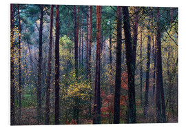 Tableau en PVC  Colorful autumn forest - Mark Scheper