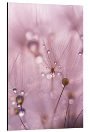 Tableau en aluminium  Dewdrops on a dandelion seed - Mark Scheper