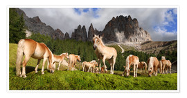 Poster  Haflinger horses in a meadow in front of the Rosengarten Mountains - Michael Rucker
