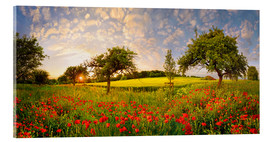 Verre acrylique  Poppies field with fruit trees at sunset - Michael Rucker