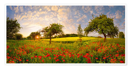 Poster  Poppies field with fruit trees at sunset - Michael Rucker