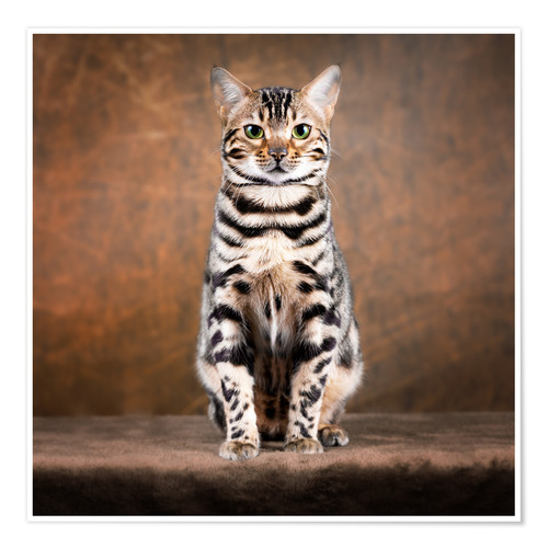 Poster Proud Bengal cat