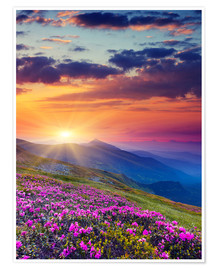 Poster  Rhododendron blossom in the Carpathians