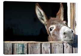 Toile  Cute curious donkey