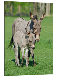 Tableau en aluminium  Donkey mum and her little baby