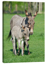Toile  Donkey mum and her little baby