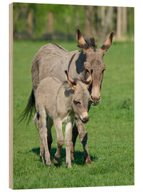 Bois  Donkey mum and her little baby