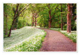 Poster Forest path in spring