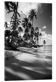 Verre acrylique  Tropical palm trees on a Brazilian beach in black and white - Alex Saberi