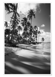 Alex Saberi - Tropical palm trees on a Brazilian beach in black and white