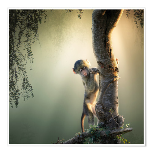 Poster Baby baboon in tree