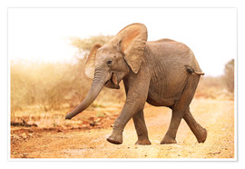 Poster  Happy elephant, South Africa - wiw