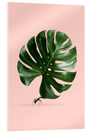 Verre acrylique  MONSTERA ANT - Jonas Loose