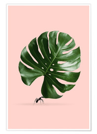 Poster Fourmi et monstera