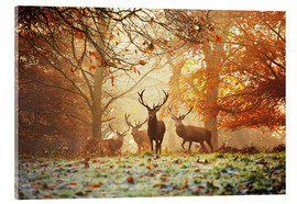 Verre acrylique  Stags and deer in an autumn forest with mist - Alex Saberi