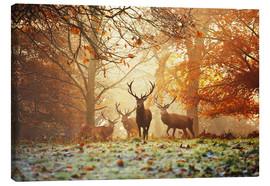 Toile  Stags and deer in an autumn forest with mist - Alex Saberi
