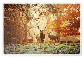 Poster Stags and deer in an autumn forest with mist