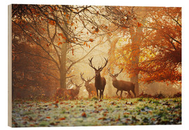 Bois  Stags and deer in an autumn forest with mist - Alex Saberi