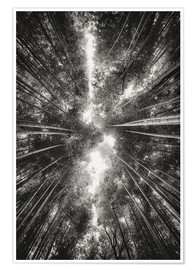 Poster  Bamboo forest II - Pascal Deckarm