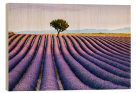 Tableau en bois  Lavender field and tree at sunset, Provence - Matteo Colombo