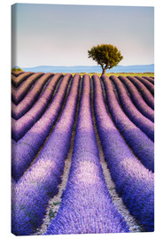 Tableau sur toile  Tree in a lavender field, Provence - Matteo Colombo