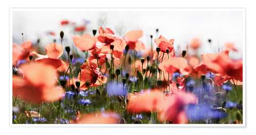 Poster Poppies and Cornflowers