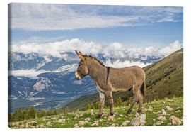 Toile  Donkeys on a lonely mountain meadow