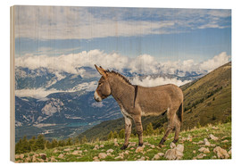 Tableau en bois  Donkeys on a lonely mountain meadow
