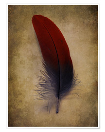 Poster  Blue and red feather - Jaroslaw Blaminsky