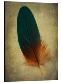 Tableau en aluminium  Green and orange feather - Jaroslaw Blaminsky