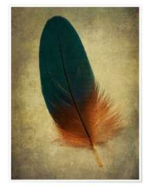 Poster Green and orange feather